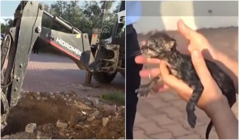 VIDEO   Clipe emoționante până la lacrimi! Au spart trotuarul și un canal pentru a scoate un puișor de pisică care miorlăia neîncetat