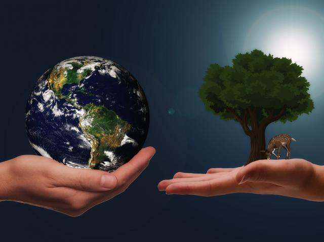 Pungi Biodegradabile vs. Pungi Compostabile