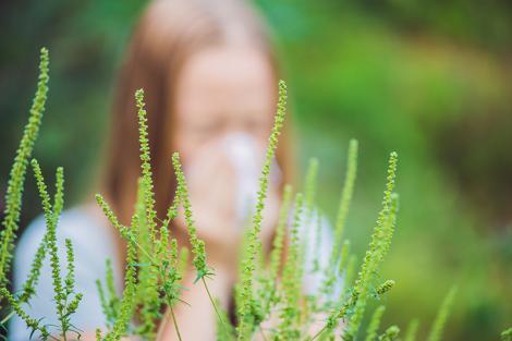 Pericolul alergiei la ambrozie: Care sunt simptomele și cum apar problemele