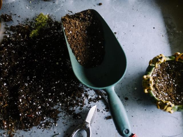 5 greșeli de amenajare a grădinii și cum să le eviți