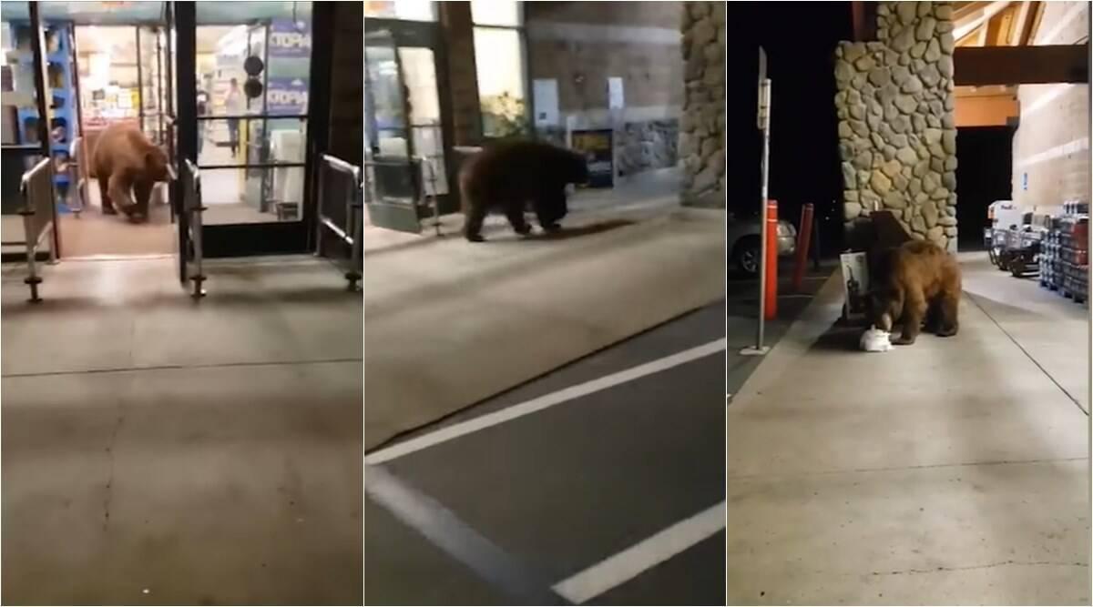 """Urs la cumpărături! Ce a făcut animalul """"civilizat"""", într-un magazin, i-a lăsat mască pe angajați! VIDEO"""