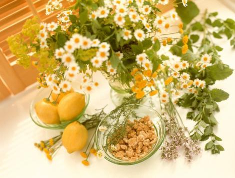 Plante medicinale care cresc imunitatea și trebuie consumate toamna