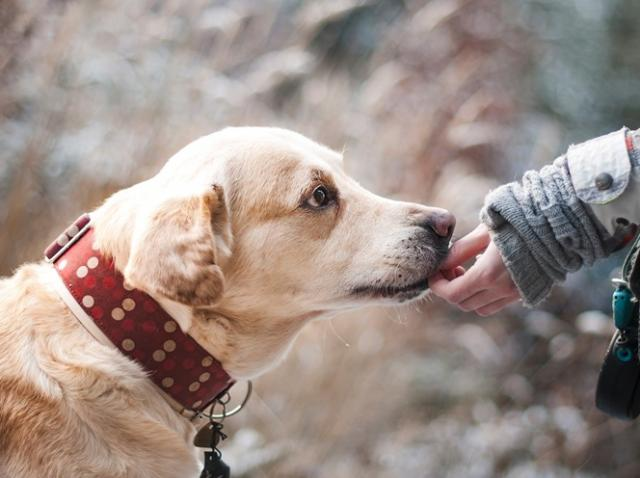 Cele mai populare rase de câini