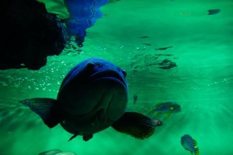 Peste in acvariu, fundal verde