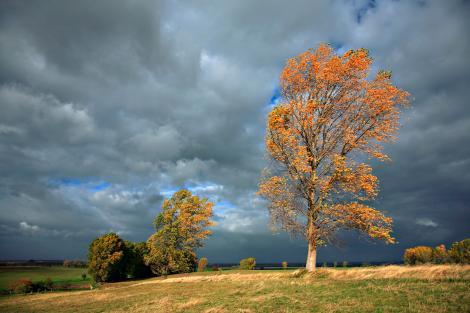 Alertă ANM! Cod portocaliu de ploi severe și vijelii. Care sunt zonele afectate de vreme rea