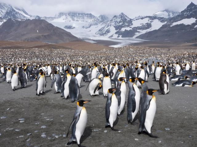 pinguini pe o plaja