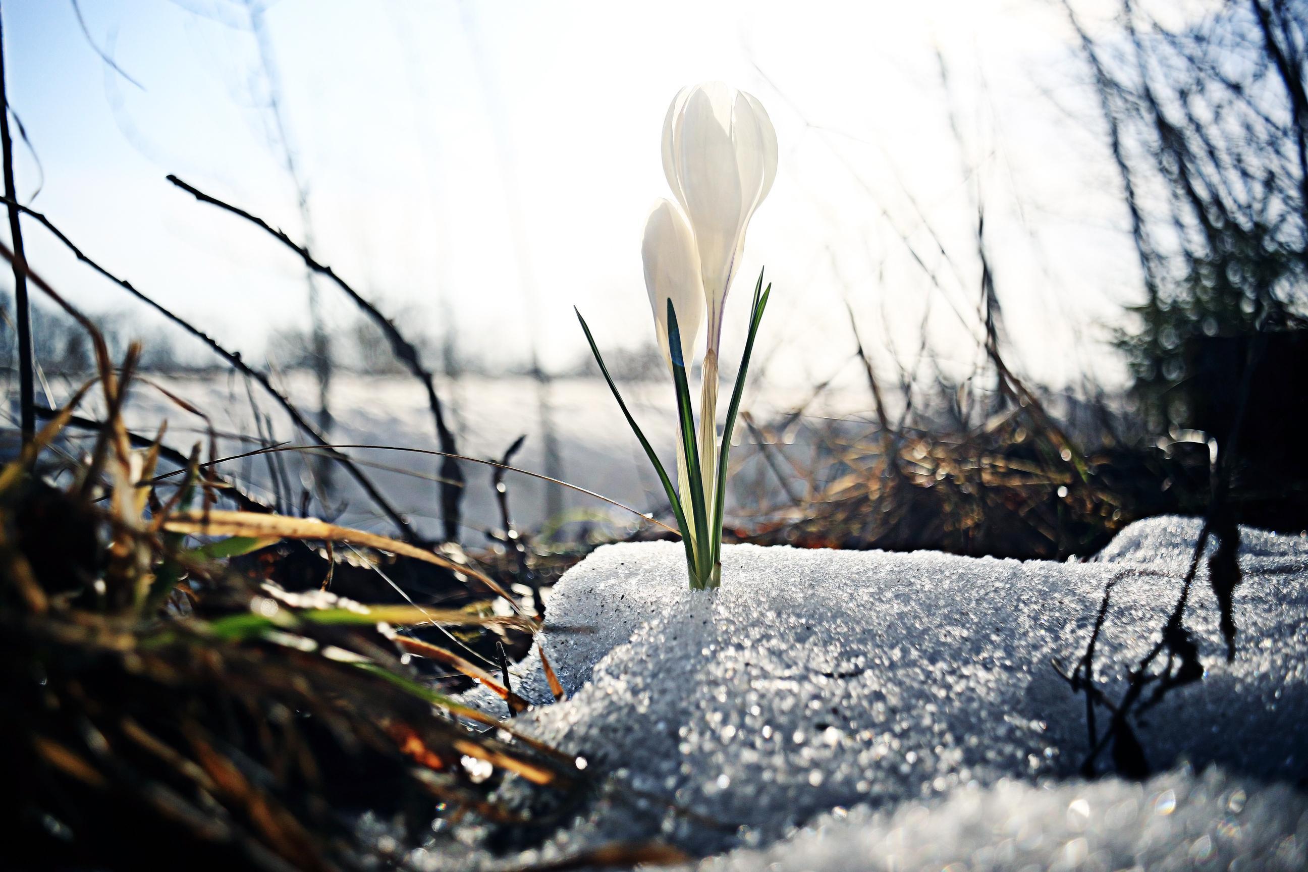 Alertă ANM! Temperaturile se modifică extrem în luna martie 2021. Meteorologii au anunțat când scăpăm de vremea rea