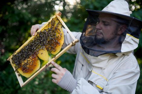 apicultor cu fagure de albine, stup