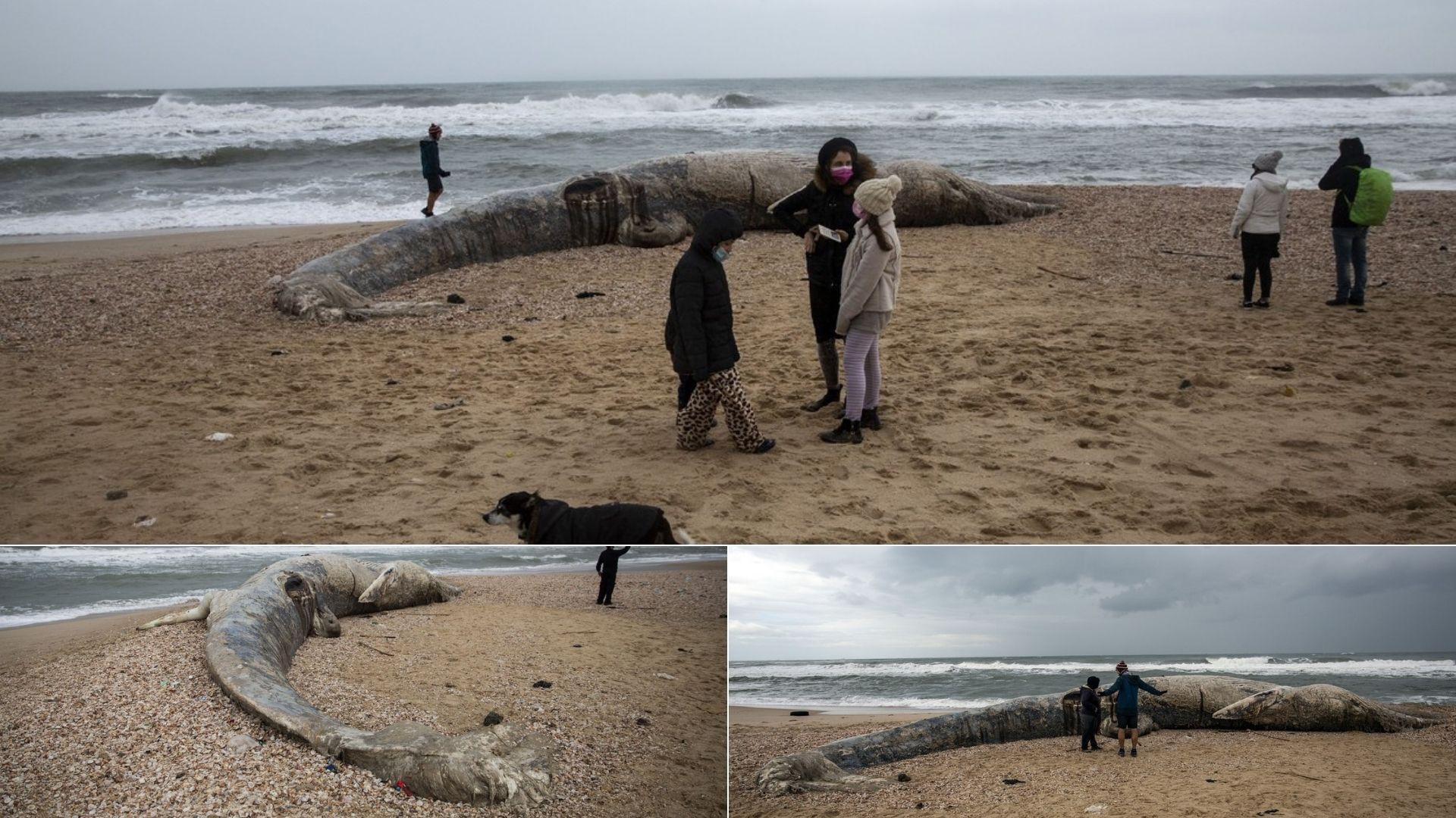 Fiara marină, de 17 metri, adusă la mal de poluarea cu gudron. Puțini și-au dat seama ce este