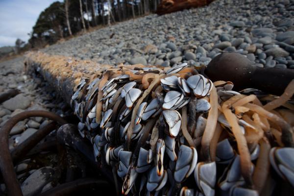 garnacte de gasca asezate pe o teava de pe o plaja