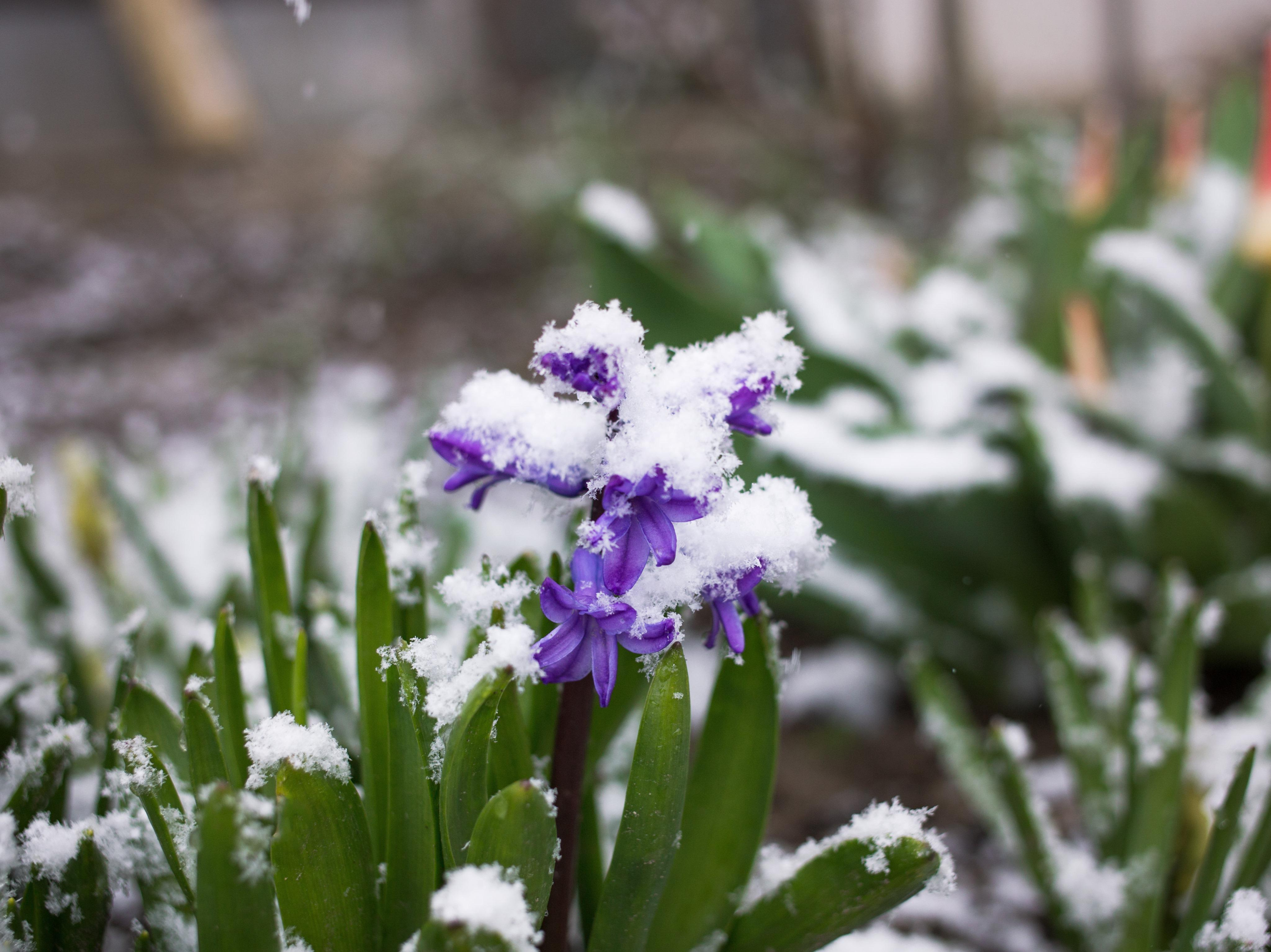 Cum va fi vremea de Paște. Meteorologii au anunțat prognoza meteo pentru săptămâna sărbătorilor pascale și 1 mai
