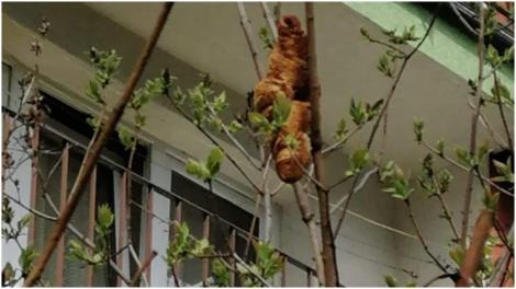"""Croissantul despre care polonezii au crezut că este o """"creatură"""", în copac"""