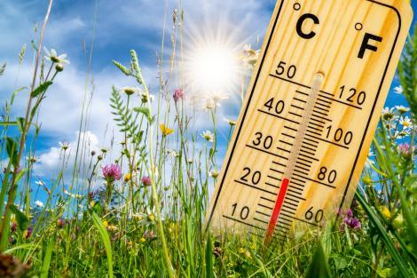 Soare, flori și un temrometru car eindică 25 de grade Celsius