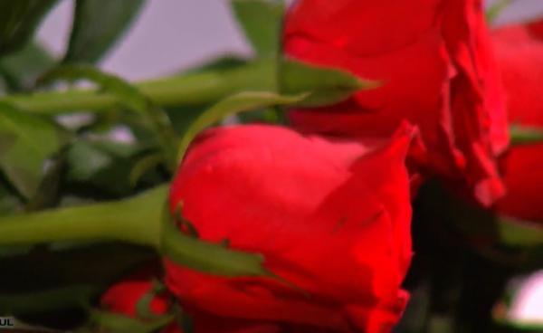 imagine cu trandafirii oferiti la ceremonia de la Burlacul