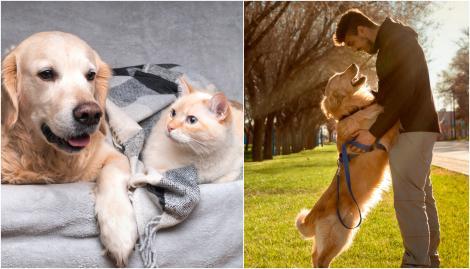 Ce poți face cu cățelul sau cu pisica ta dacă vrei să pleci în vacanță. Cele mai bune soluții pentru animalele de companie