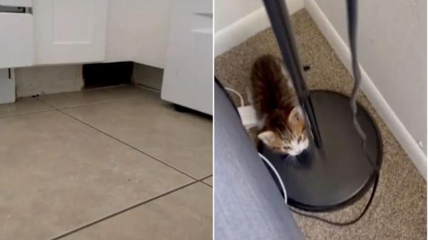 colaj de imagini cu o pisica si o gaura in mobila