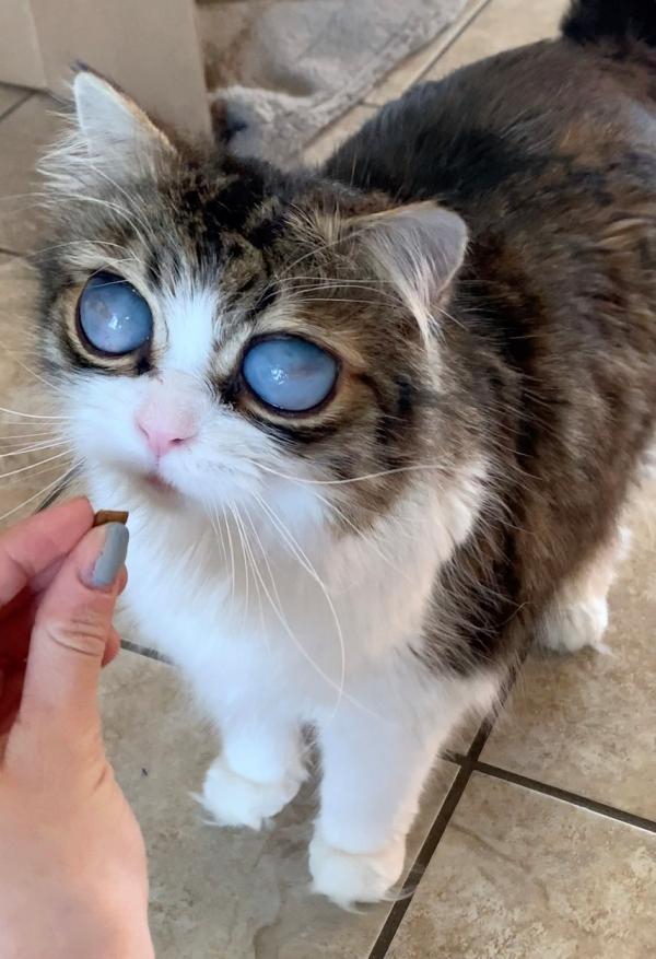 pisica monicai brisson, cu ochi mari, albiciosi