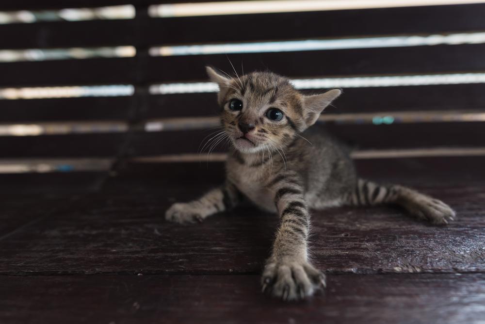 Operațiune de salvare impresionantă. 16 pisici, dintre care șapte pui, prinse între pereții unei case, au fost salvate