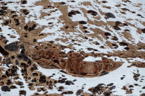 Iluzie optică pentru cei cu privire ageră! Găsești leopardul din această fotografie?