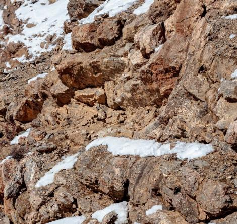Iluzie optică virală. Găsești leopardul din imagine? Doar cei cu privire de vultur reușesc