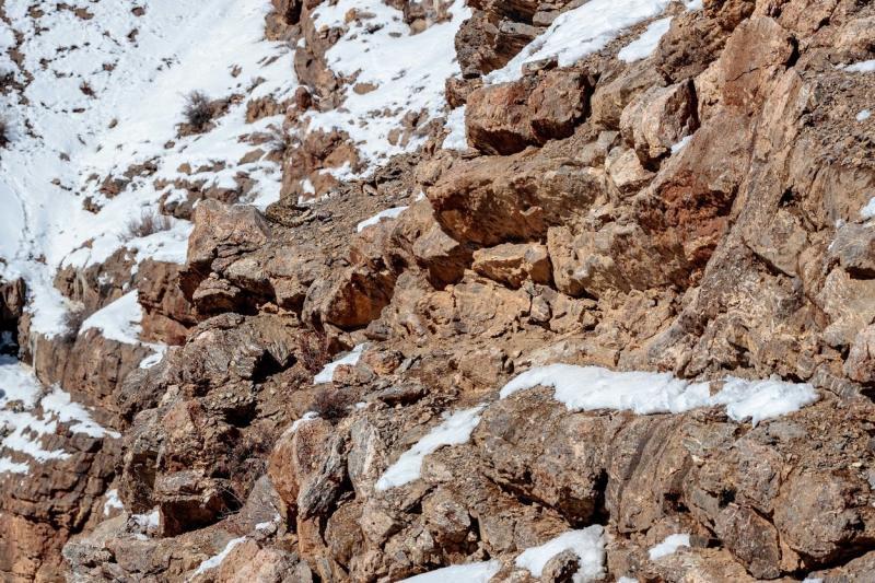 imagine cu un leopard camuflat printre stanci