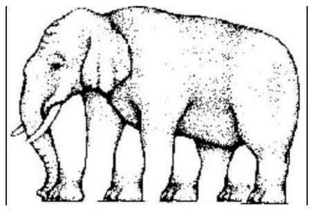 Poți vedea câte picioare are acest elefant? Ce se ascunde, de fapt, în spatele iluziei optice
