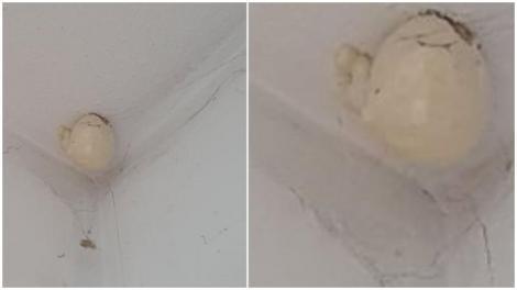 """""""Oul ciudat"""" care a apărut pe tavanul unei locuințe. Proprietarii au creat o adevărată polemică pe Internet. Ce era, de fapt"""