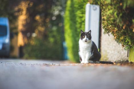 O femeie a găsit pe stradă o pisică și a decis s-o ia acasă. Ceea ce a urmat a lăsat-o fără cuvinte