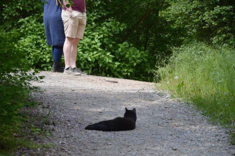 O tânără a găsit o pisică pe stradă și a decis s-o ia acasă, dar în scurt timp a avut o surpriză uriașă. Ce a descoperit la animal