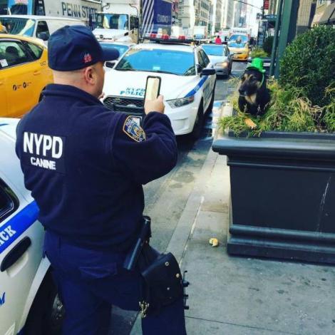 Descoperire... teribilă. Poliția new-yorkeză a surprins un câine undercover!