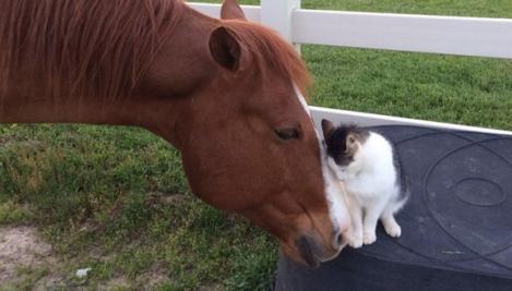 Pisicuța Sappy și calul Dakota, cei mai buni și drăgălași prieteni din lume. Nu ai cum să nu îi iubeşti!
