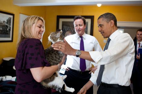 Brexit a trecut, Motanul Larry rămâne stăpân la reședința noului premier al Marii Britanii. Istoria felinelor de pe Downing Street numărul 10