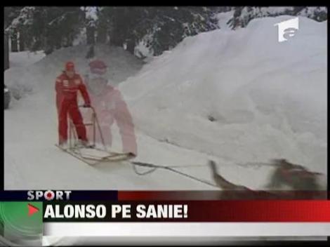 Alonso, pe sanie!