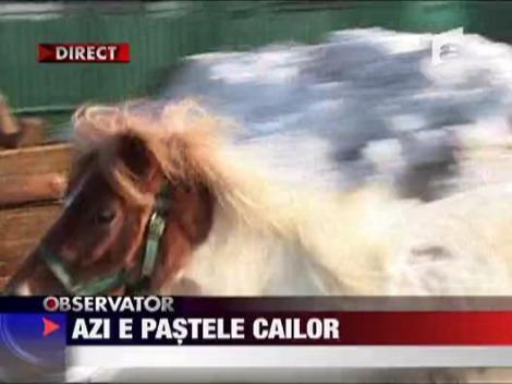 Pastele cailor in Targoviste