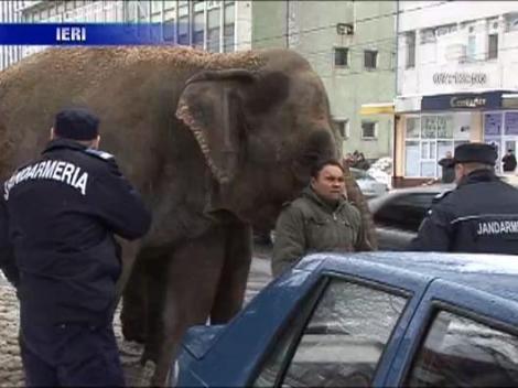Cu elefantii la plimbare