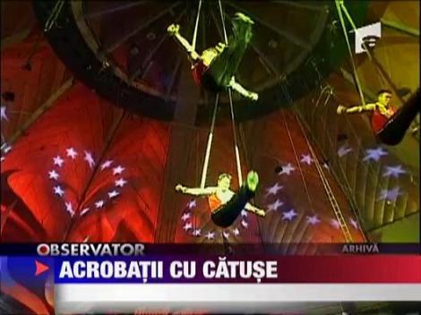 Acrobatii cu catuse! De la circ, in casele oamenilor!