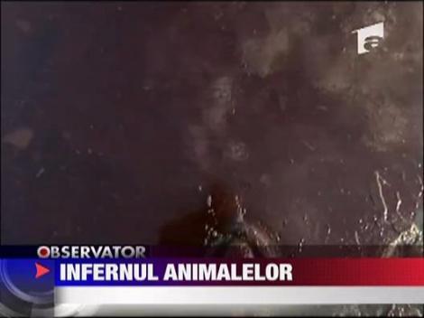 Infern al animalelor