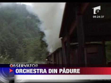 Orchestra din padure