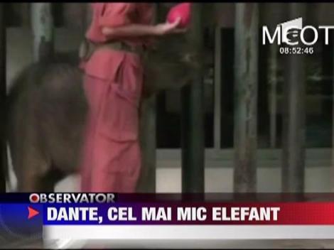 Dante, cel mai mic elefant
