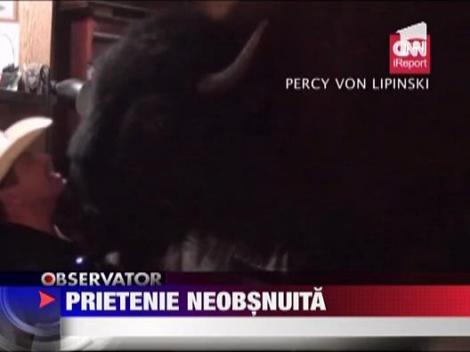 Bizonul, animal de companie