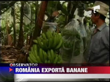 Romania e fruntasa la exportul de banane!