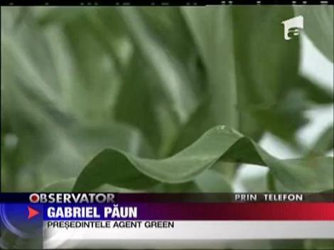 Soia modificata genetic va ajunge pe farfuriile romanilor la anul