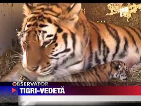 Patru pui de tigru fac senzatie la un circ din Cehia
