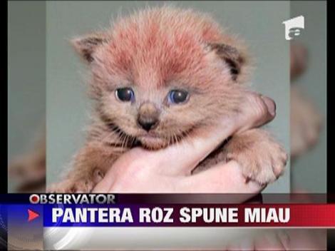 """Pantera roz spune """"Miau"""""""