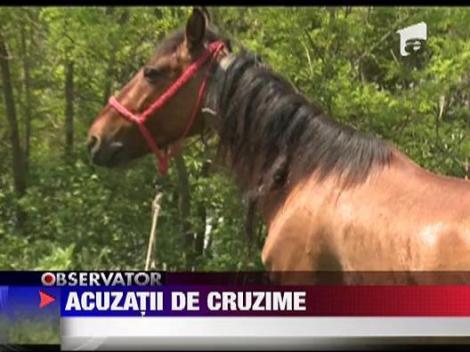 Un barbat din Bacau a lovit un cal cu toporul