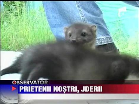 Doi pui de jder au fost adoptati de angajatii Parcului Natural din Arad