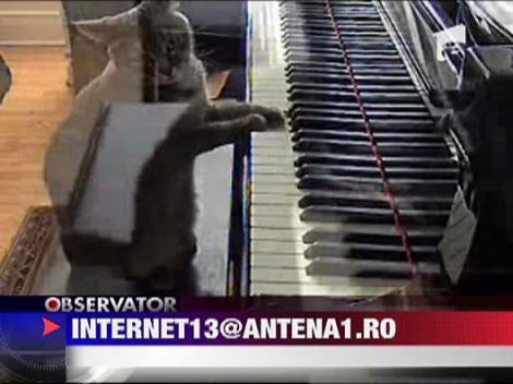 Pisica pianista