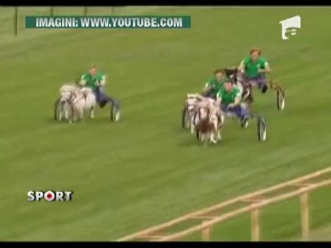 6 fotbalisti de la Werder Bremen s-au intrecut de pe ponei
