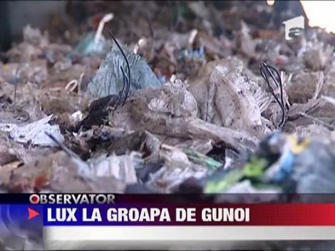 Surprize la groapa de gunoi