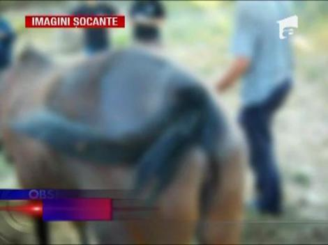 IMAGINI SOCANTE / Un barbat a incendiat un cal pentru ca i-a incalcat proprietatea